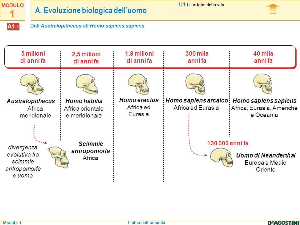 1 Modulo 1 MODULO Lalba dellumanità 5 milioni di anni fa 2,5 milioni di anni fa 40 mila anni fa 300 mila anni fa 1,8 milioni di anni fa Australopithec