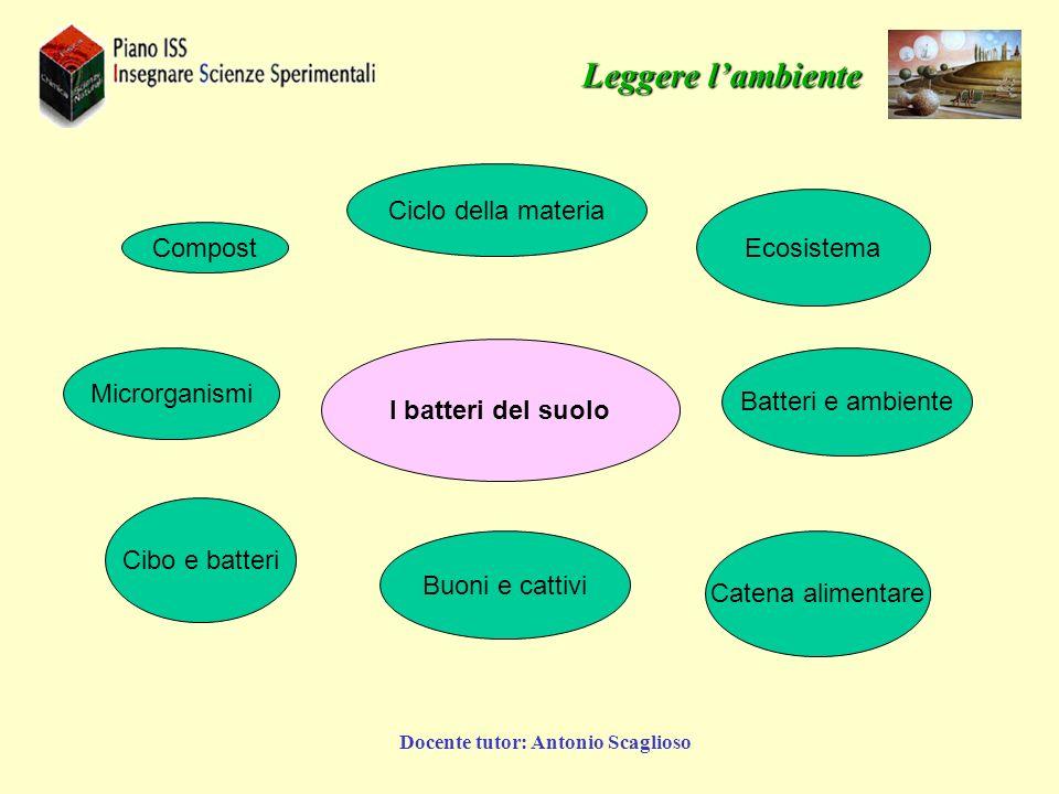 Docente tutor: Antonio Scaglioso I batteri del suolo Ciclo della materia Batteri e ambiente Buoni e cattivi Cibo e batteri Ecosistema Microrganismi Ca