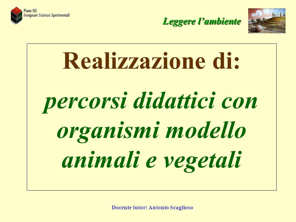 Docente tutor: Antonio Scaglioso percorsi didattici con organismi modello animali e vegetali Realizzazione di: Leggere lambiente