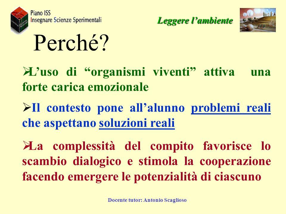 Docente tutor: Antonio Scaglioso Che cosa sono.