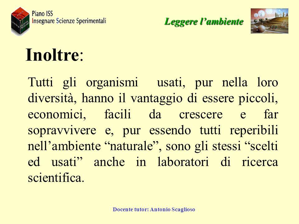 Docente tutor: Antonio Scaglioso Leggere lambiente Inoltre: Tutti gli organismi usati, pur nella loro diversità, hanno il vantaggio di essere piccoli,