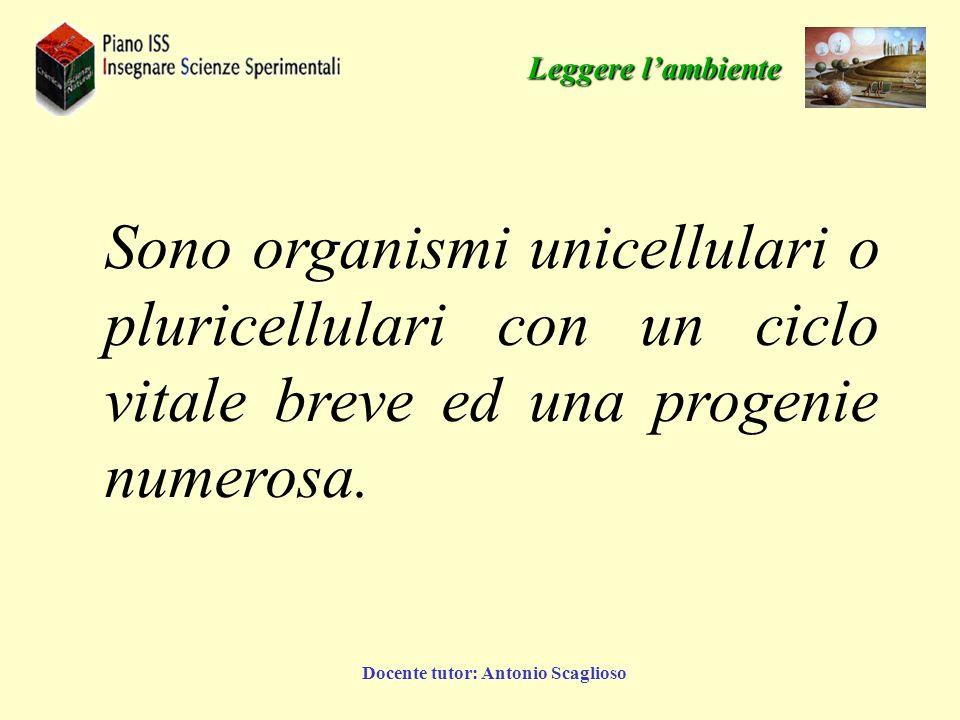 Docente tutor: Antonio Scaglioso Sono organismi unicellulari o pluricellulari con un ciclo vitale breve ed una progenie numerosa. Leggere lambiente