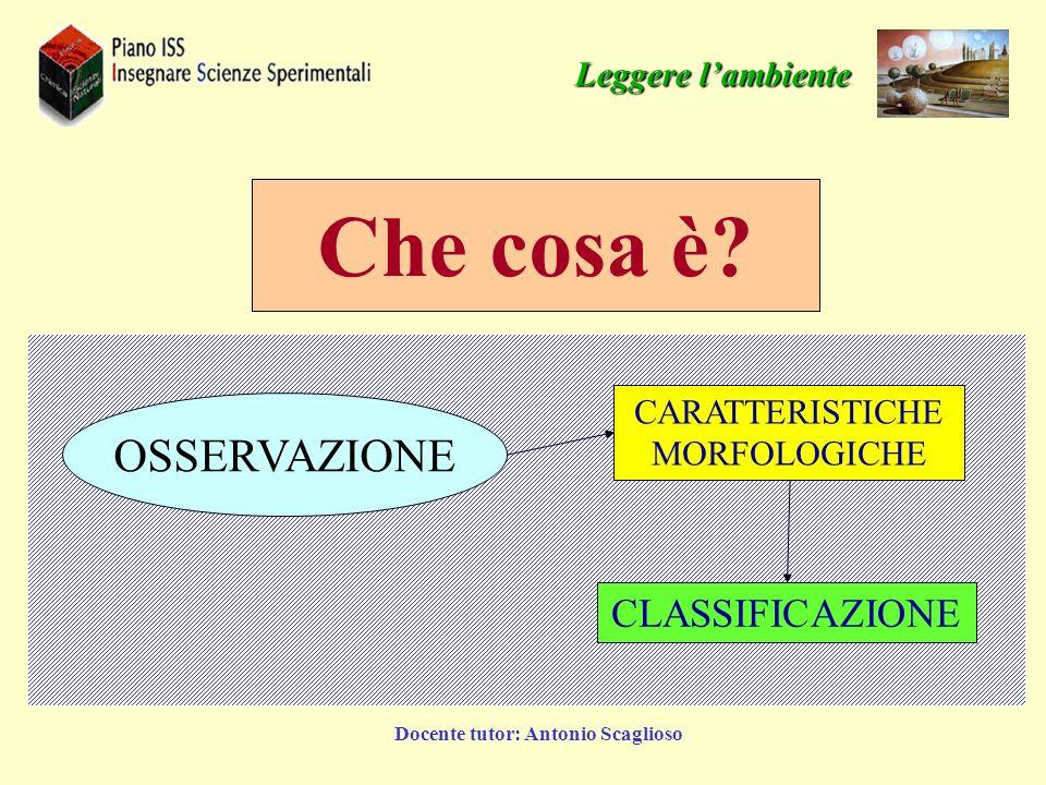Docente tutor: Antonio Scaglioso Forma Colori Dimensioni… Permeabilità Porosità Composizione Acidità Peso specifico Leggere lambiente