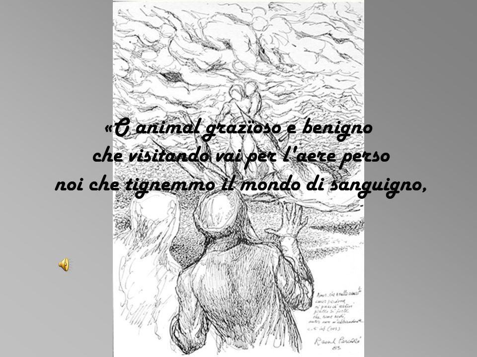 «O animal grazïoso e benigno che visitando vai per l'aere perso noi che tignemmo il mondo di sanguigno,