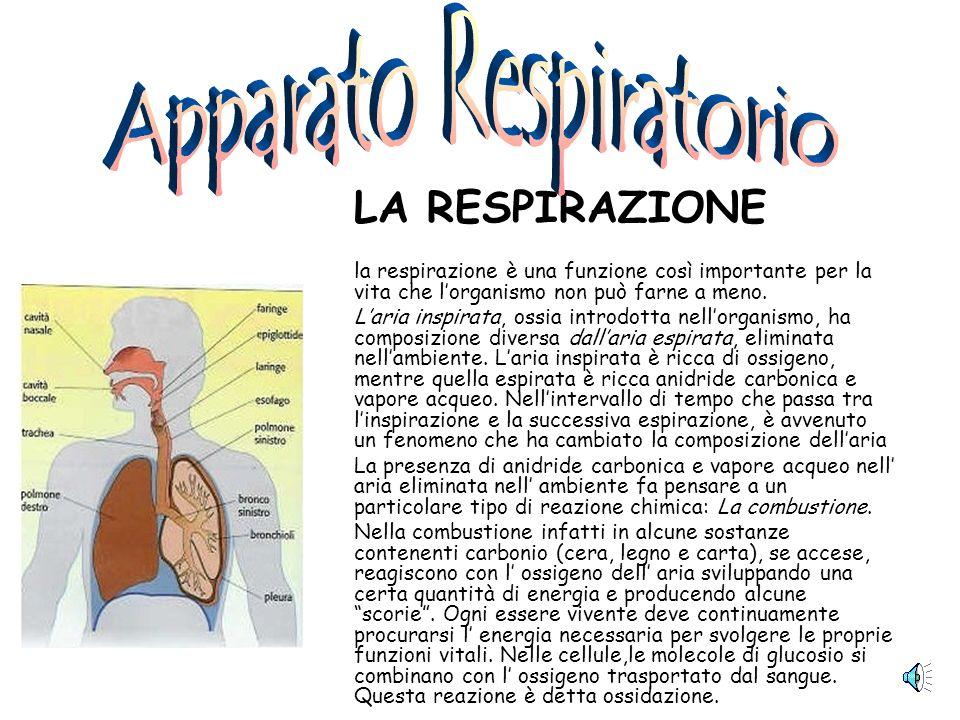 LA RESPIRAZIONE la respirazione è una funzione così importante per la vita che lorganismo non può farne a meno.