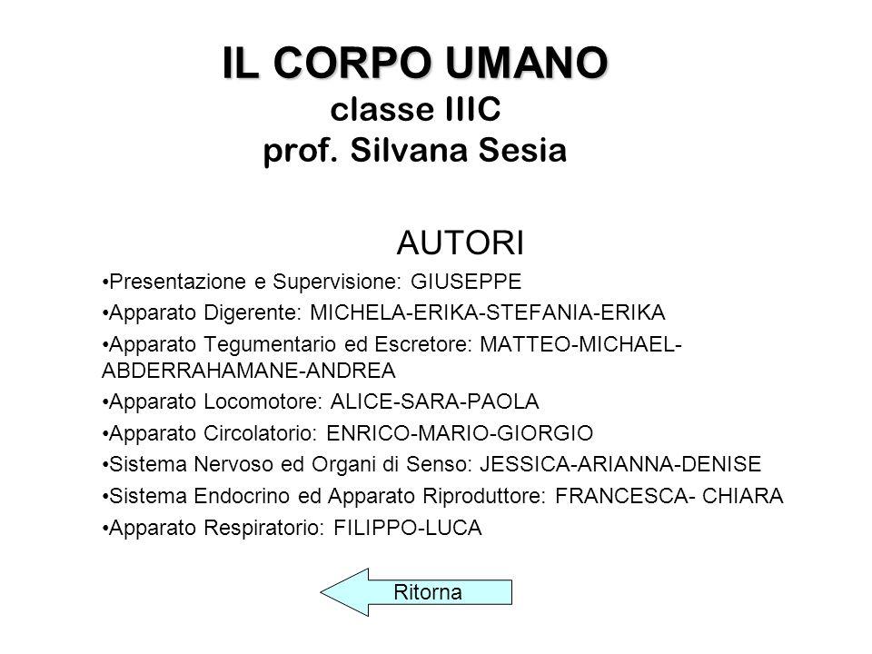 IL CORPO UMANO IL CORPO UMANO classe IIIC prof.