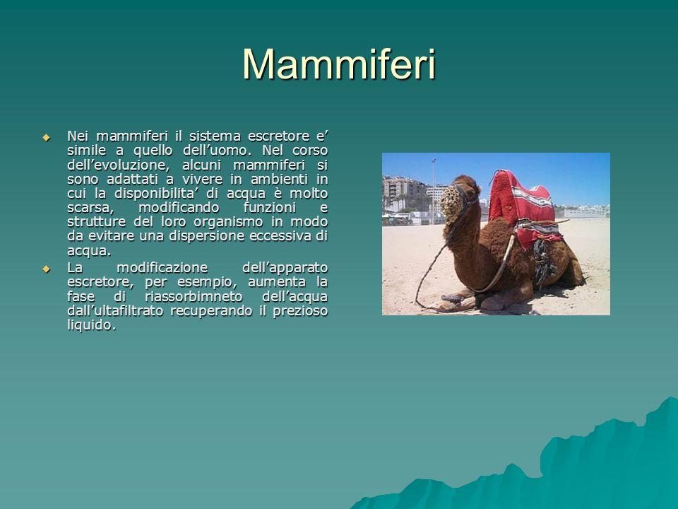 Mammiferi Nei mammiferi il sistema escretore e simile a quello delluomo.