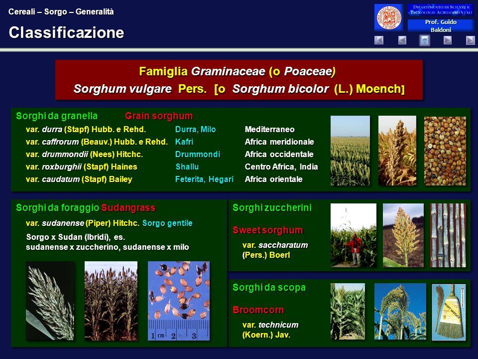 Prof. Guido Baldoni Prof. Guido BaldoniClassificazione Cereali – Sorgo – Generalità