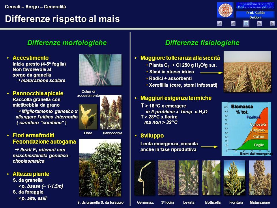 Prof. Guido Baldoni Prof. Guido Baldoni Differenze fisiologiche Maggiore tolleranza alla siccitàMaggiore tolleranza alla siccità Pianta C 4 CI 250 g H
