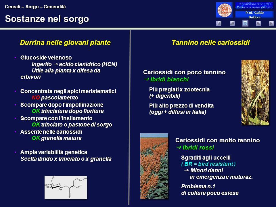 Prof. Guido Baldoni Prof. Guido Baldoni Sostanze nel sorgo Glucoside velenoso Ingerito acido cianidrico (HCN) Utile alla pianta x difesa da erbivoriGl