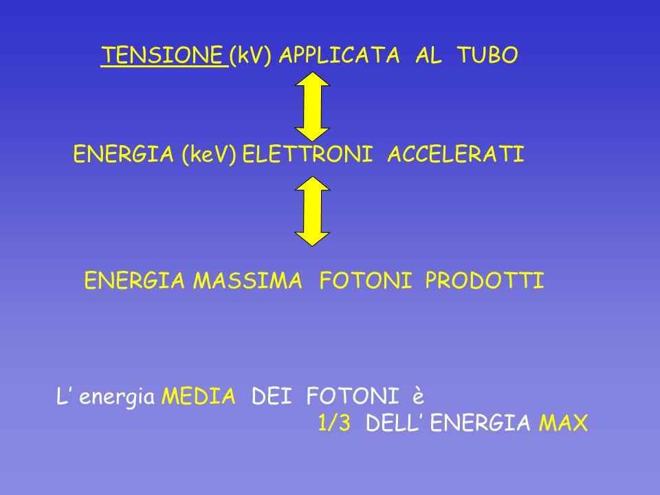 ENERGIA (keV) ELETTRONI ACCELERATI L energia MEDIA DEI FOTONI è 1/3 DELL ENERGIA MAX TENSIONE (kV) APPLICATA AL TUBO ENERGIA MASSIMA FOTONI PRODOTTI