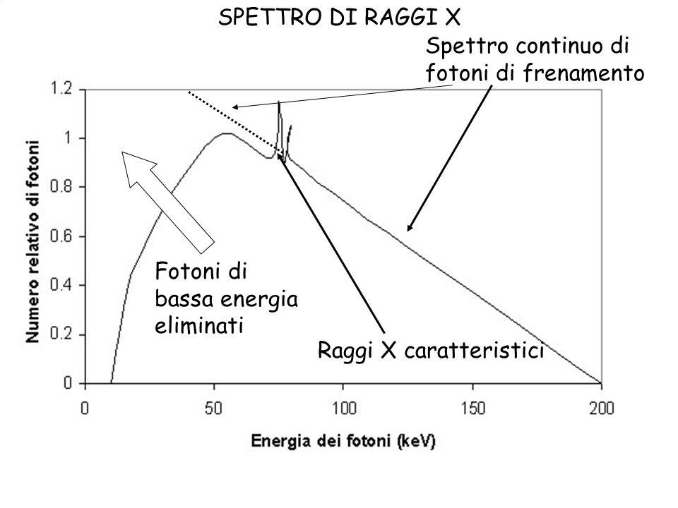 SPETTRO DI RAGGI X Spettro continuo di fotoni di frenamento Fotoni di bassa energia eliminati Raggi X caratteristici