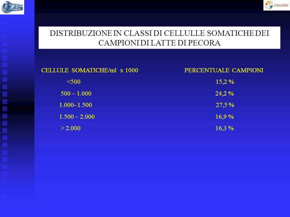 DISTRIBUZIONE IN CLASSI DI CELLULLE SOMATICHE DEI CAMPIONI DI LATTE DI PECORA CELLULE SOMATICHE/ml x 1000 PERCENTUALE CAMPIONI <500 15,2 % 500 – 1.000 24,2 % 1.000- 1.500 27,5 % 1.500 – 2.000 16,9 % > 2.000 16,3 %