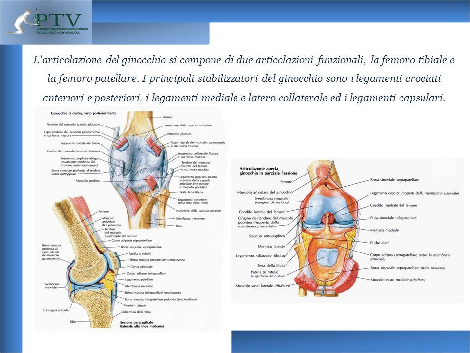 L'articolazione del ginocchio si compone di due articolazioni funzionali, la femoro tibiale e la femoro patellare. I principali stabilizzatori del gin
