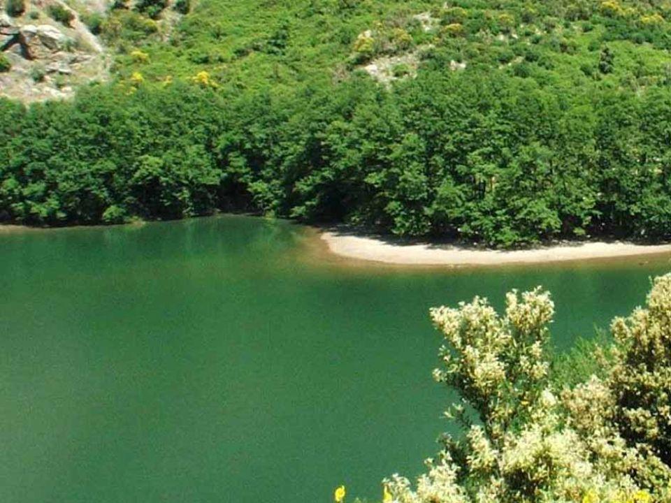 FLORA e FAUNA Loleandro e il faggio ricoprono la zona interessata, mentre lungo il torrente Bonamico crescono la tamerice e piante erbacee come la felce tropicale: l Aspromonte è l unica località della Penisola in cui questa pianta è presente (la specie è diffusa in Sardegna e in Corsica).