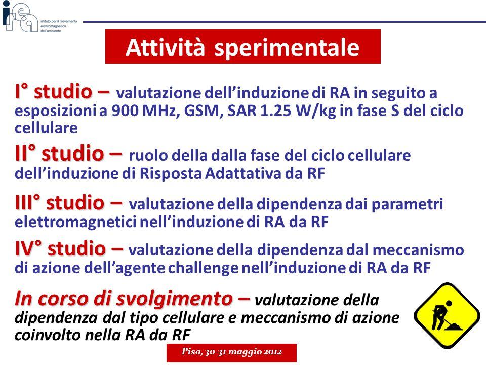 Attività sperimentale Pisa, 30-31 maggio 2012 I° studio – I° studio – valutazione dellinduzione di RA in seguito a esposizioni a 900 MHz, GSM, SAR 1.2