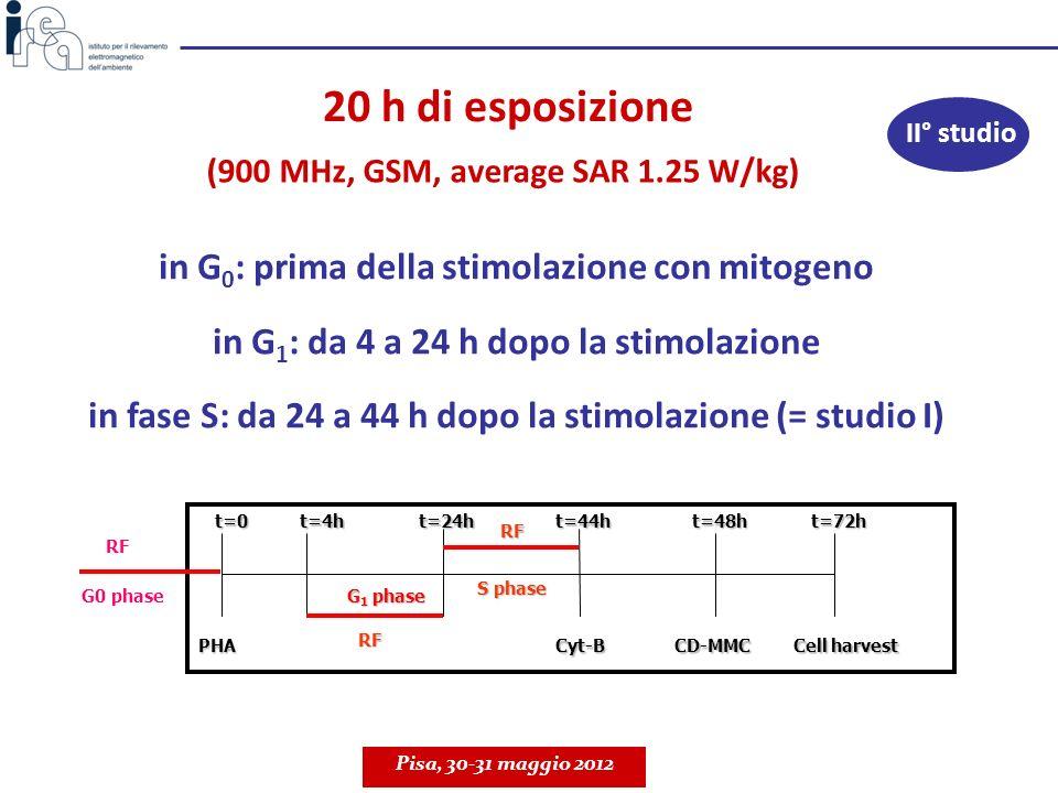 in G 0 : prima della stimolazione con mitogeno in G 1 : da 4 a 24 h dopo la stimolazione in fase S: da 24 a 44 h dopo la stimolazione (= studio I) 20