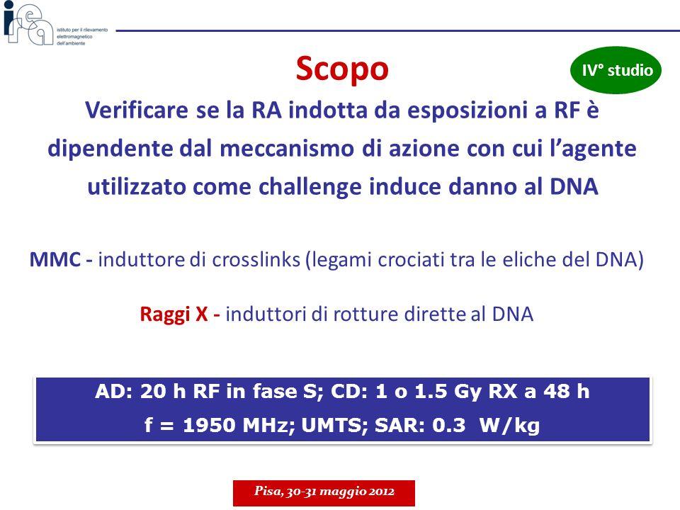 Verificare se la RA indotta da esposizioni a RF è dipendente dal meccanismo di azione con cui lagente utilizzato come challenge induce danno al DNA AD