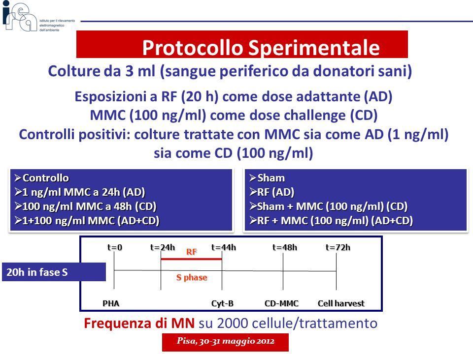 RISULTATI Esposizioni a RF in fase S inducono un significativo decremento del danno al DNA indotto da MMC (AR) Validazione dei risultati precedenti su un maggior numero di individui Pisa, 30-31 maggio 2012 II° studio