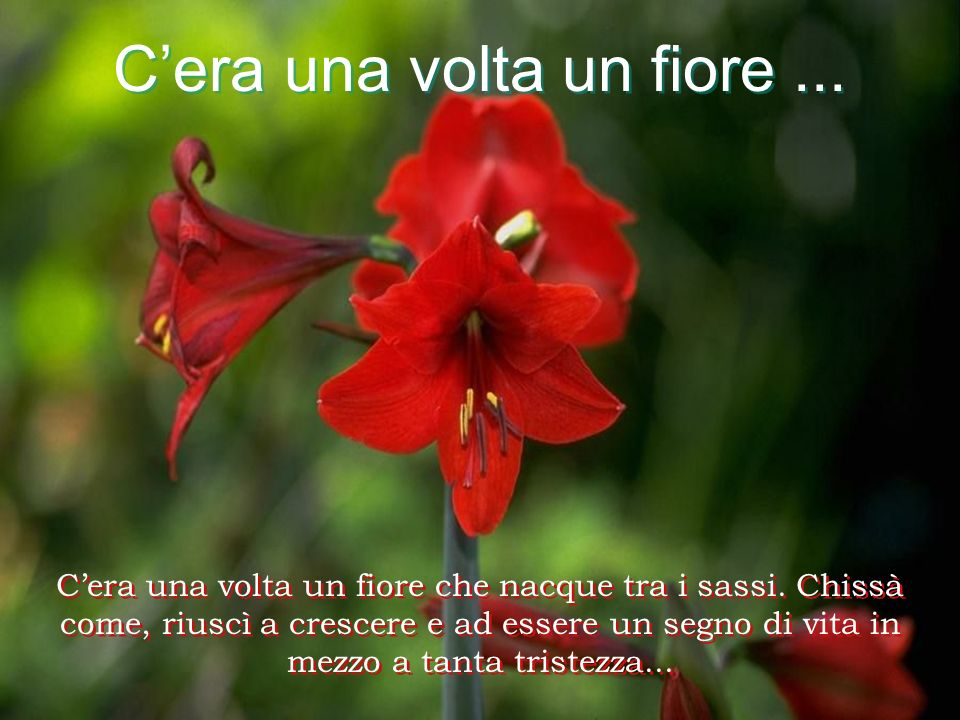 Cera una volta un fiore...Cera una volta un fiore...