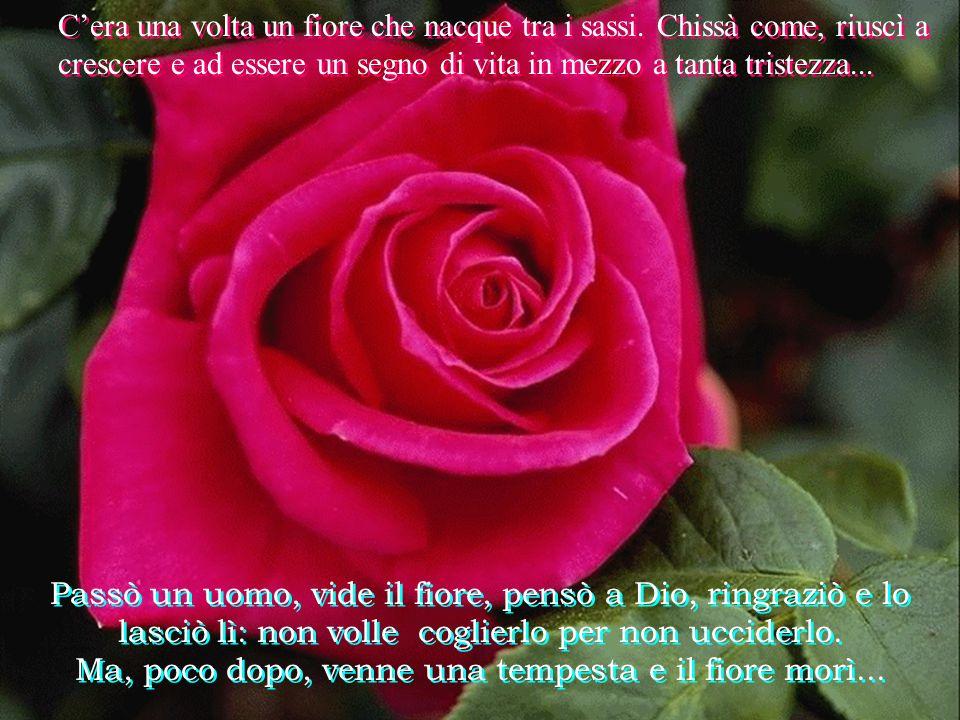 Passò una giovane e rimase incantata del fiore Subito pensò a Dio. Colse il fiore e lo portò in chiesa. Ma, dopo una settimana, il fiore era appassito
