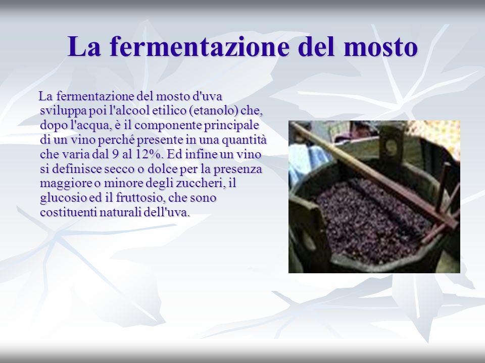 La fermentazione del mosto La fermentazione del mosto d'uva sviluppa poi l'alcool etilico (etanolo) che, dopo l'acqua, è il componente principale di u
