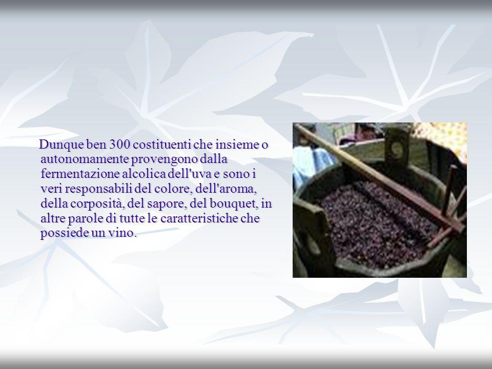 Dunque ben 300 costituenti che insieme o autonomamente provengono dalla fermentazione alcolica dell'uva e sono i veri responsabili del colore, dell'ar