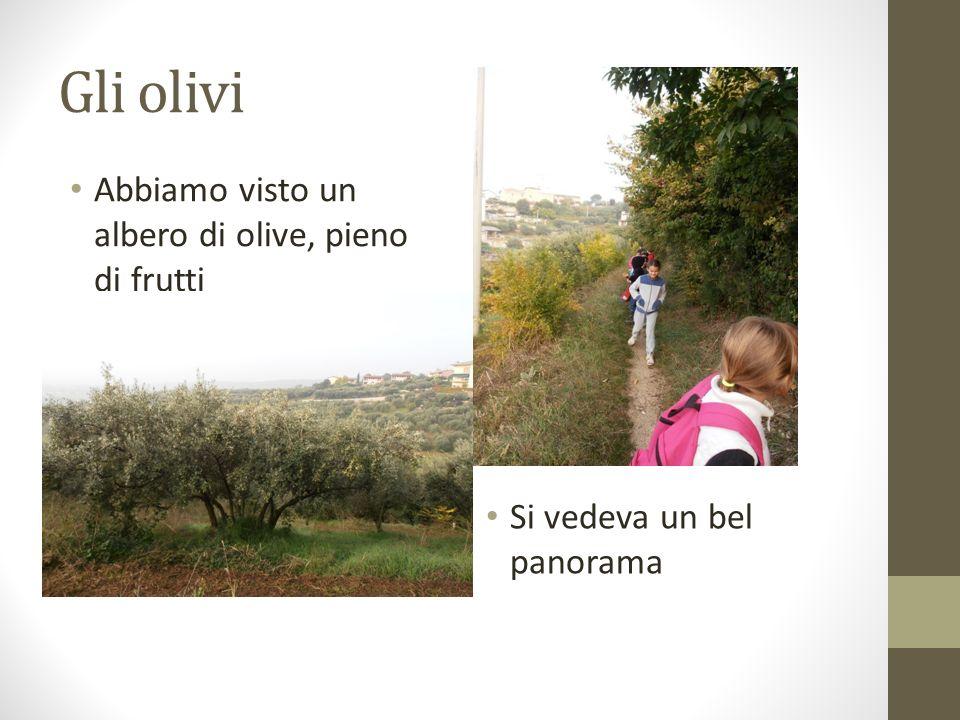 Gli olivi Abbiamo visto un albero di olive, pieno di frutti Si vedeva un bel panorama