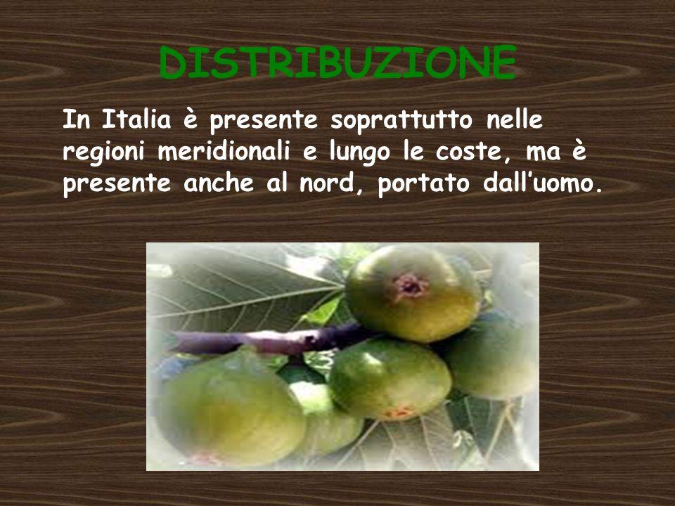 HABITAT Il fico è una pianta molto resistente alla siccità e vegeta nelle regioni della vite, dell olivo e degli agrumi.