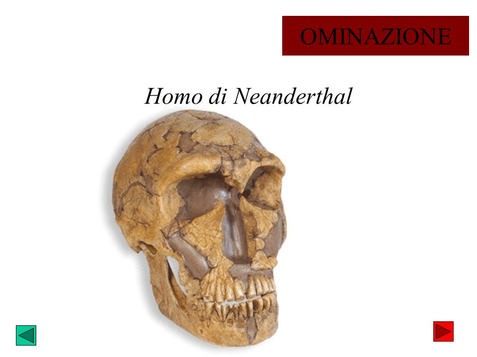 Homo di Neanderthal OMINAZIONE