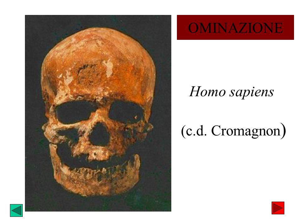 Homo sapiens (c.d. Cromagnon ) OMINAZIONE