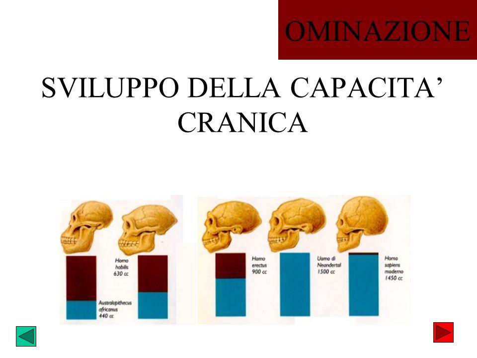 SVILUPPO DELLA CAPACITA CRANICA OMINAZIONE