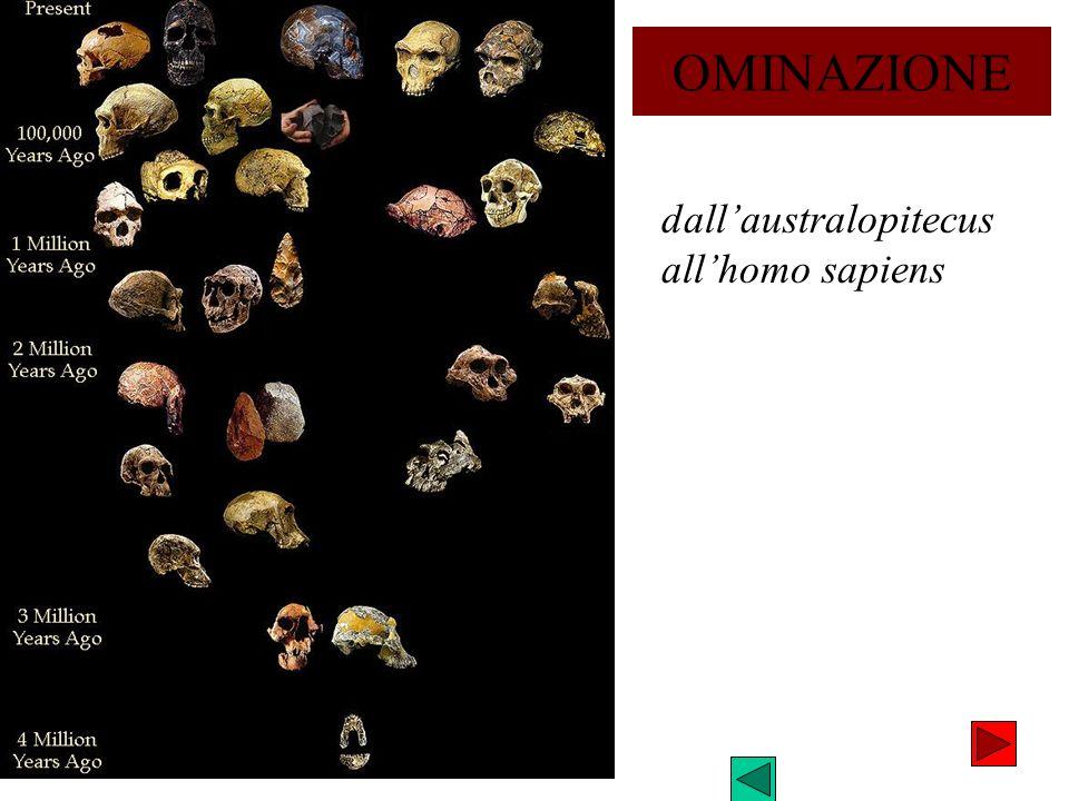 dallaustralopitecus allhomo sapiens OMINAZIONE