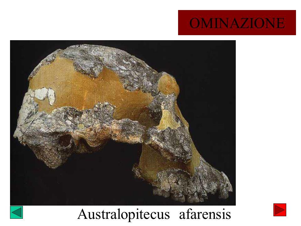 Australopitecus afarensis OMINAZIONE