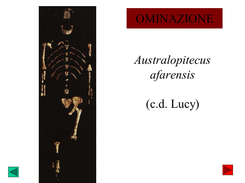 Australopitecus afarensis (c.d. Lucy) OMINAZIONE