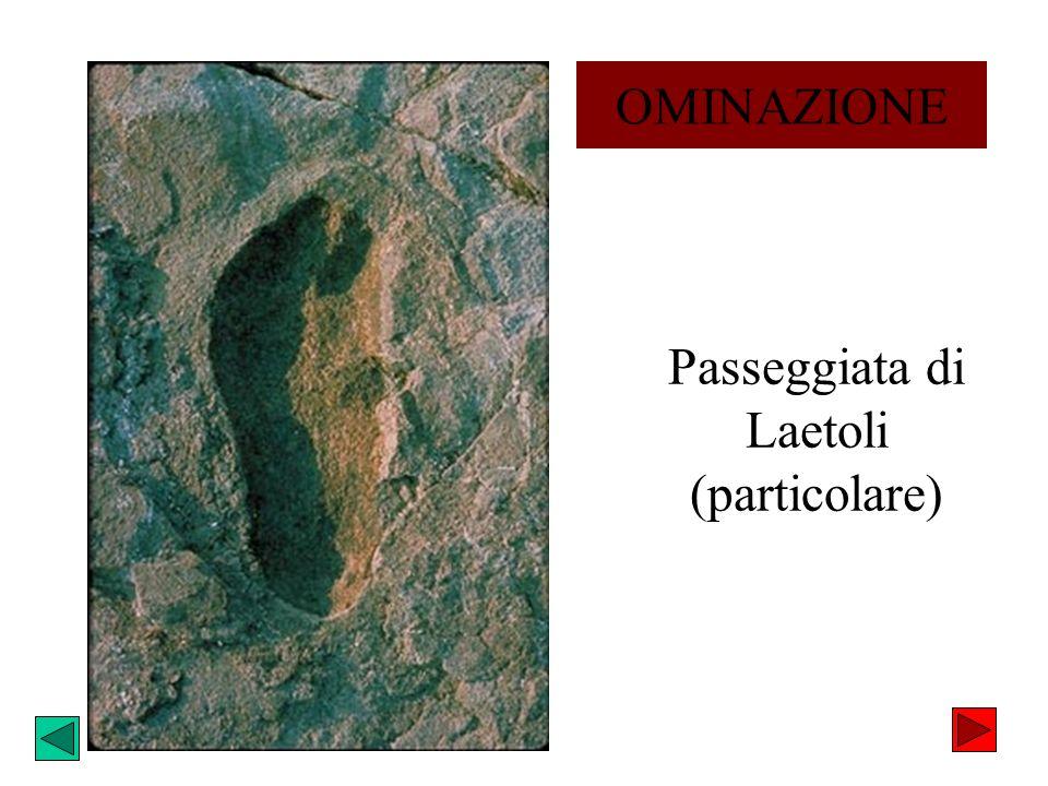 Passeggiata di Laetoli (particolare) OMINAZIONE