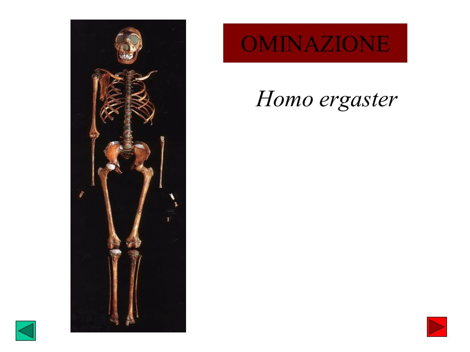 Homo ergaster OMINAZIONE