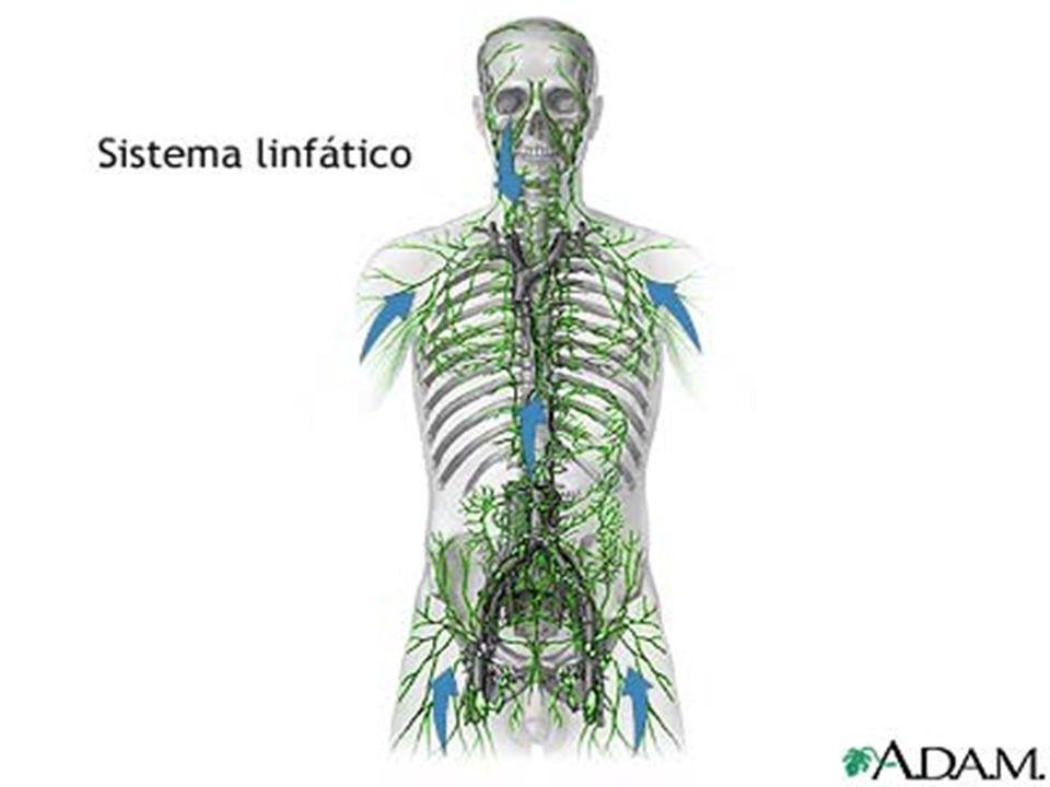 La linfa e il sistema linfatico Il sistema immunitario Il sistema immunitario e la salute delluomo Infezioni virali e vaccinoprofilassi Il virus dellAIDS