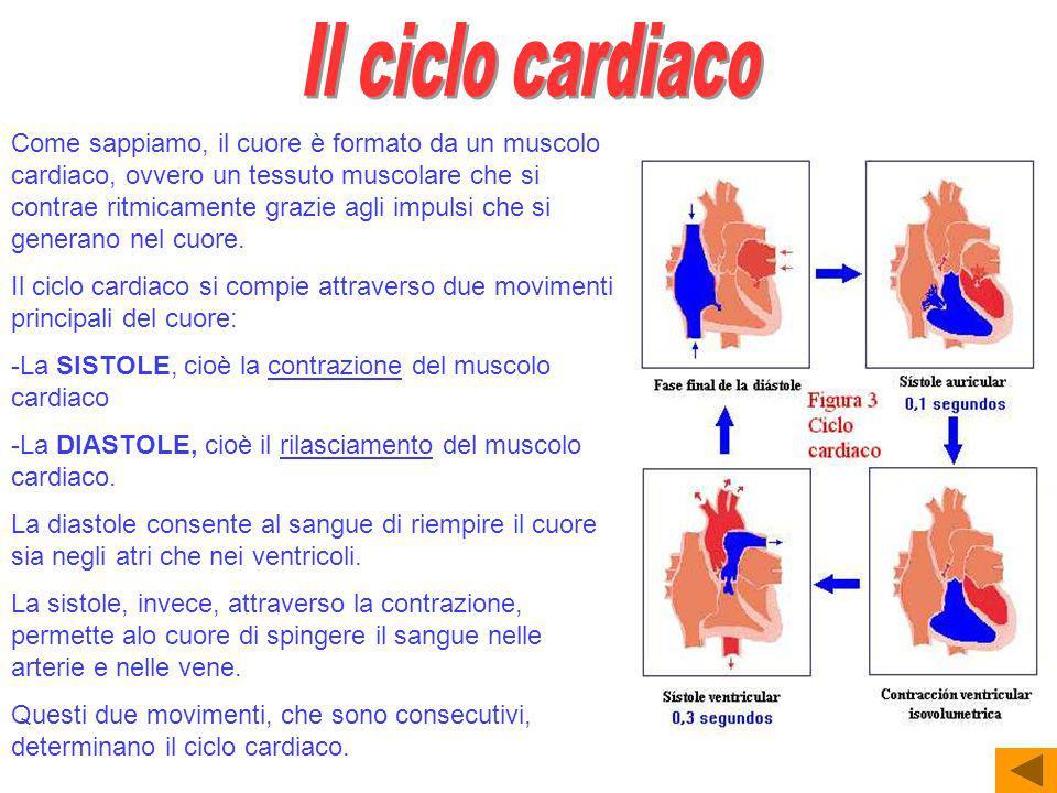 Come sappiamo, il cuore è formato da un muscolo cardiaco, ovvero un tessuto muscolare che si contrae ritmicamente grazie agli impulsi che si generano nel cuore.