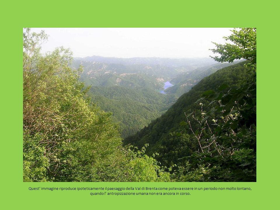Quest immagine riproduce ipoteticamente il paesaggio della Val di Brenta come poteva essere in un periodo non molto lontano, quando l antropizzazione