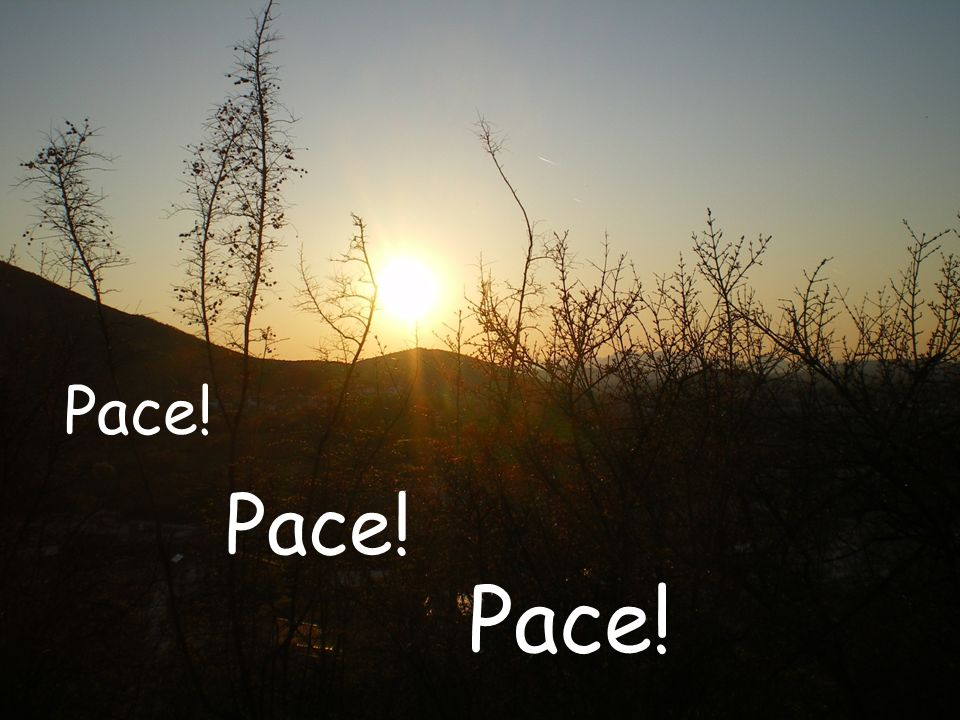 Pace! Pace!