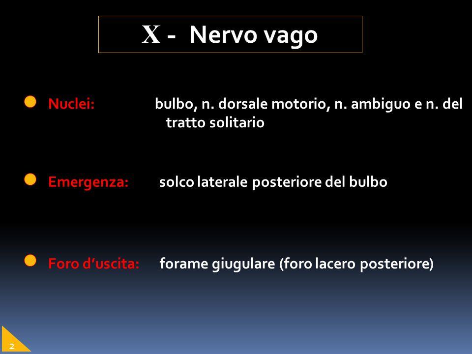 Emergenza: solco laterale posteriore del bulbo Nuclei: bulbo, n. dorsale motorio, n. ambiguo e n. del tratto solitario Foro duscita: forame giugulare