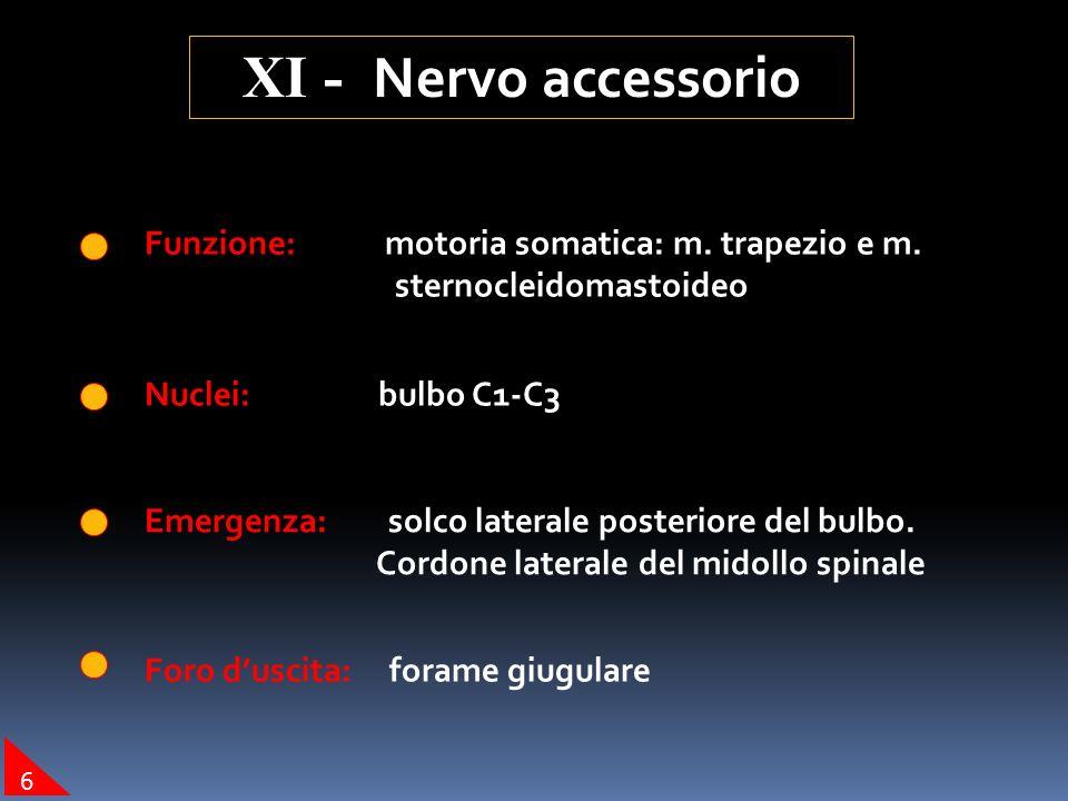 Funzione: motoria somatica: m. trapezio e m. sternocleidomastoideo Nuclei: bulbo C1-C3 Emergenza: solco laterale posteriore del bulbo. Cordone lateral