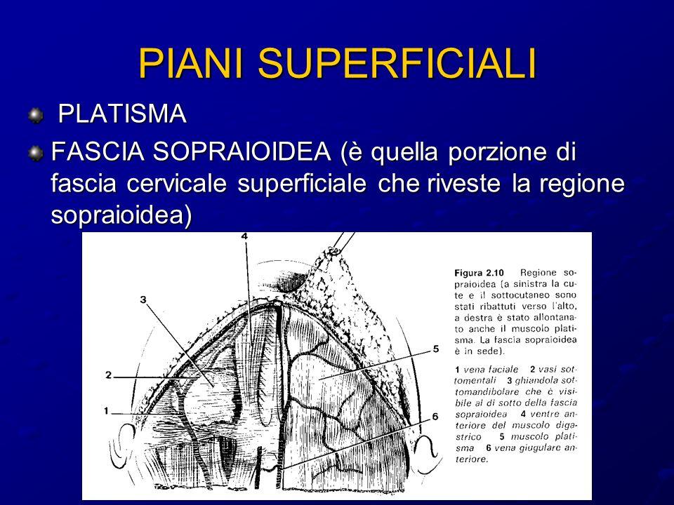 PIANI SUPERFICIALI PLATISMA PLATISMA FASCIA SOPRAIOIDEA (è quella porzione di fascia cervicale superficiale che riveste la regione sopraioidea)