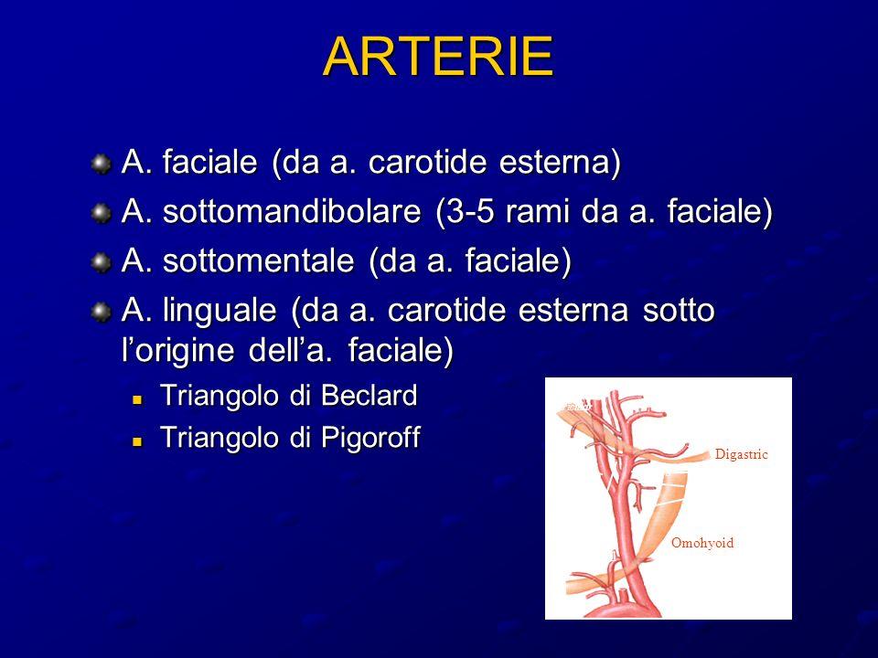ARTERIE A.faciale (da a. carotide esterna) A. sottomandibolare (3-5 rami da a.