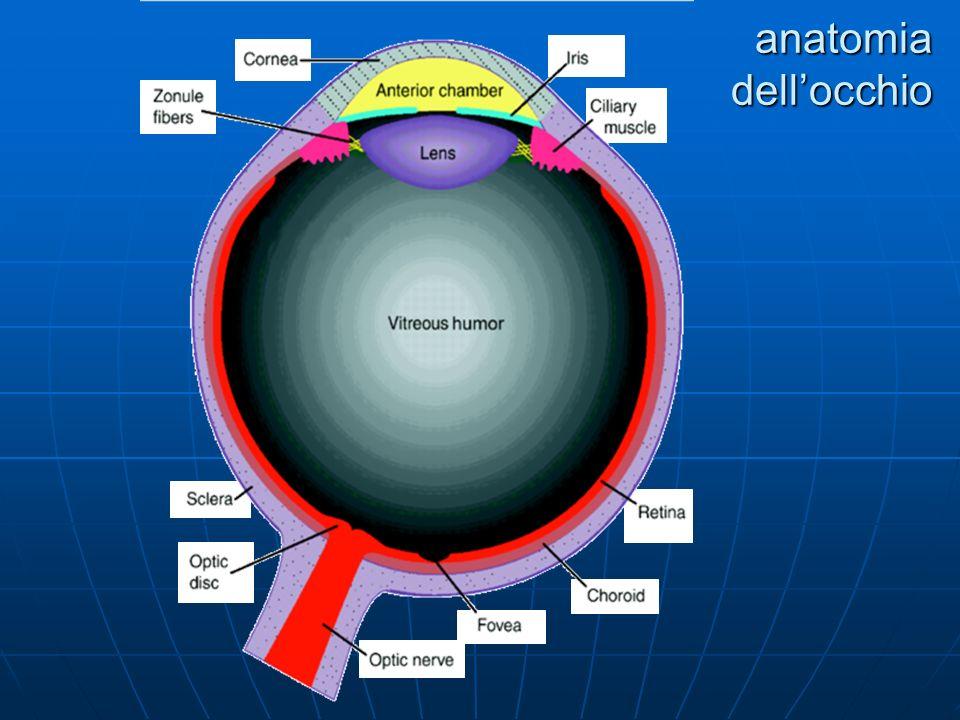 percorso dallocchio alla corteccia dellinput visivo