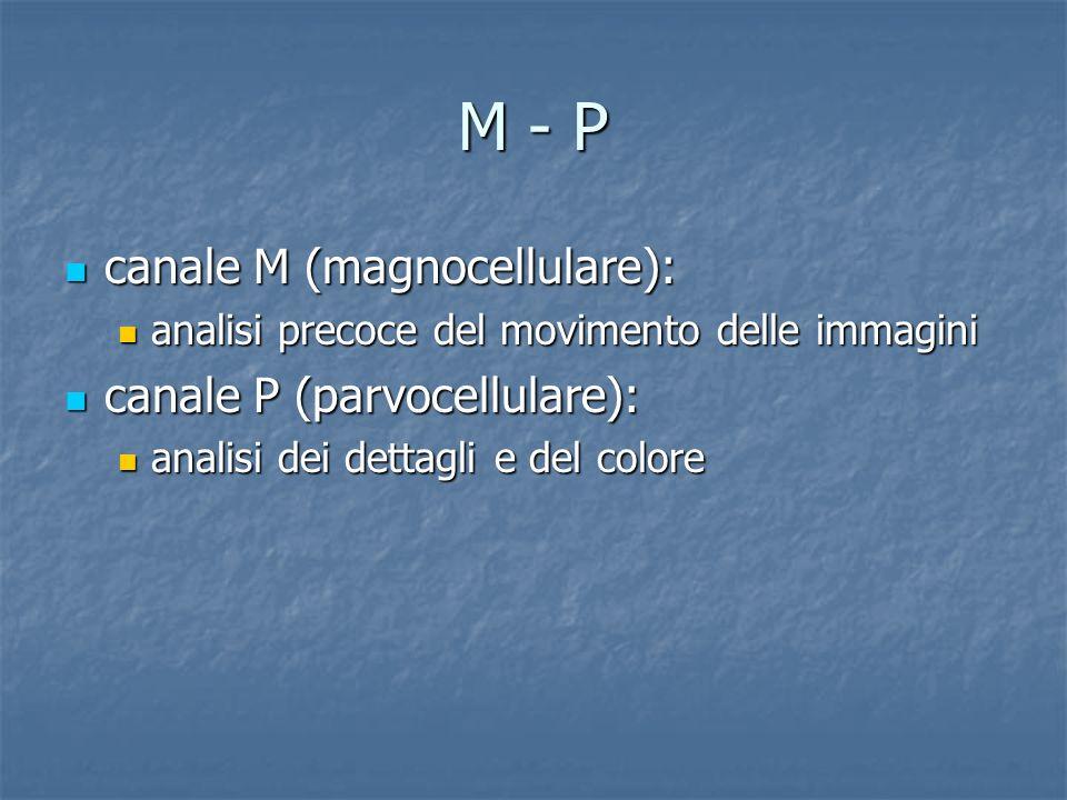 M - P canale M (magnocellulare): canale M (magnocellulare): analisi precoce del movimento delle immagini analisi precoce del movimento delle immagini