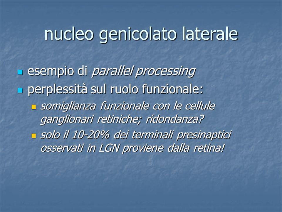 nucleo genicolato laterale esempio di parallel processing esempio di parallel processing perplessità sul ruolo funzionale: perplessità sul ruolo funzi