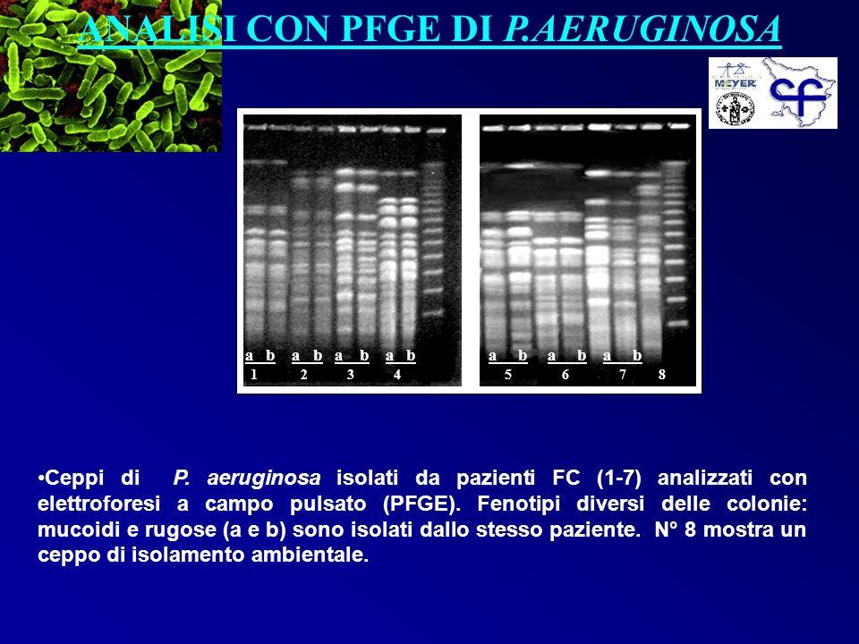 ANALISI CON PFGE DI P.AERUGINOSA a b a b a b 5 6 7 8 Ceppi di P. aeruginosa isolati da pazienti FC (1-7) analizzati con elettroforesi a campo pulsato