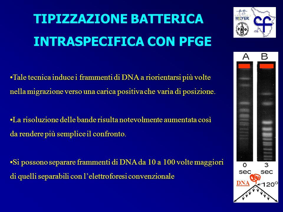 POTENZIALI FONTI DI INFEZIONI PER P.